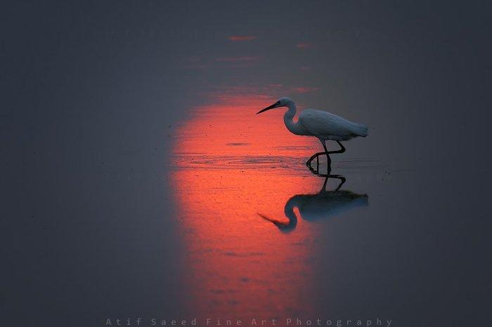 Утро красит нежным цветом Красота природы, Рассвет, Цапля, Фотография