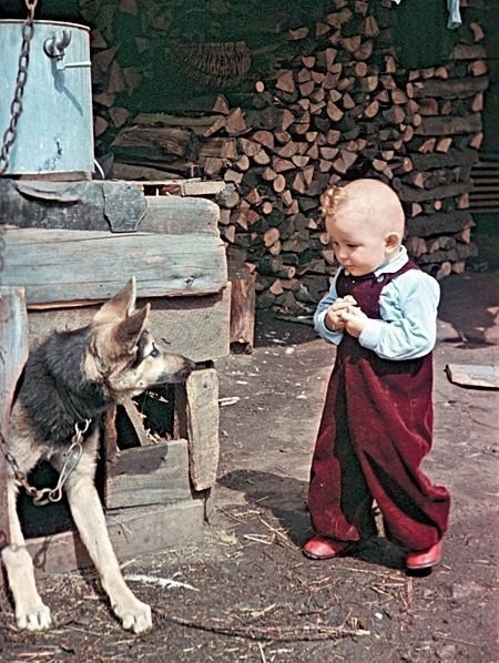 """""""Ты меня не укусишь?"""". 1955 год СССР"""