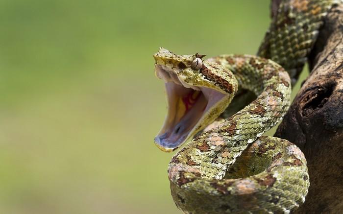 В Астраханской области змея съела бычка Астрахань, Южная Волна, Рыбалка, Змея