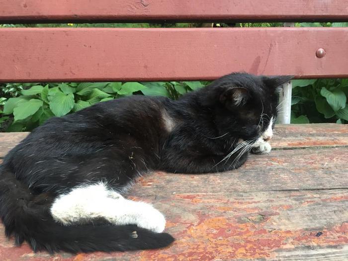 Бедный бедный черно-белый кот или как не спать ночью с пятницы на субботу. Кот, Помощь животным, Волонтеры, Длиннопост