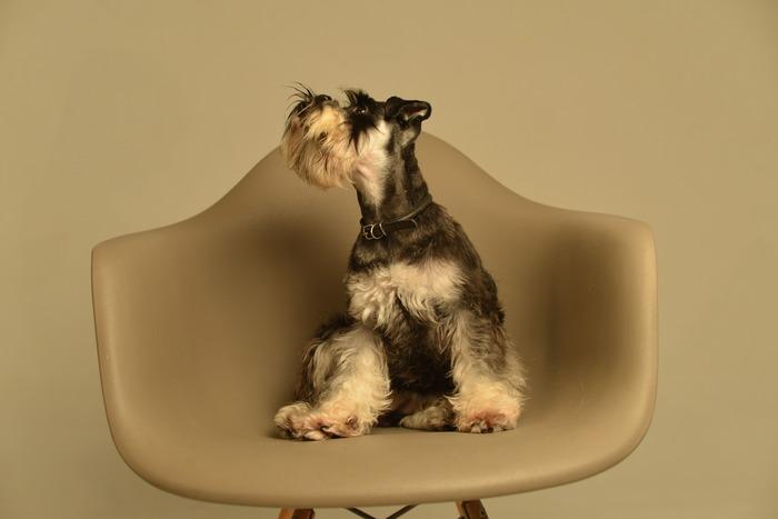 Я знаю, как пахнет солнце Собака, Друг, Длиннопост