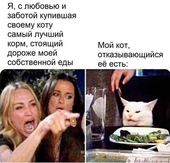 Вечно недовольный кот