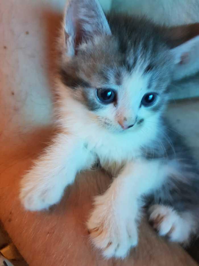 Котята в добрые руки Котята, В добрые руки, Без рейтинга, Москва, Длиннопост, Кот, Помощь животным