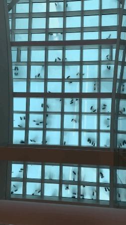 Насекомые за окном