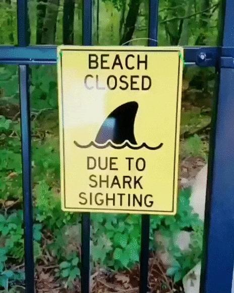 Осторожно, акула! Собака, Такса, Домашние животные, Акула, Костюм, Позитив, Видео, Гифка