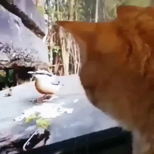 Поймай мне птичку! Кот, Котомафия, Домашние животные, Птицы, Телевизор, Рука, Видео, Гифка