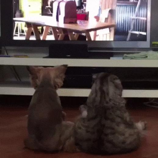 Семейный вечер Кот, Собака, Телевизор, Фильмы, Гифка, Коты и собаки вместе