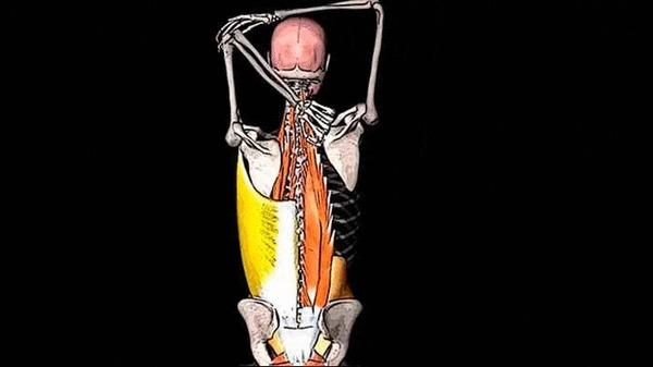 БОЛИТ СПИНА В ОБЛАСТИ ЛОПАТКИ: широчайшая мышца спины Здоровье, Медицина, Анатомия, Спорт, Фитнес, Видео, Гифка, Длиннопост