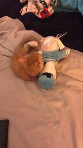 Не снимайте меня, я не причесана! Кот, Котята, Котомафия, Домашние животные, Мягкая игрушка, Милота, Гифка