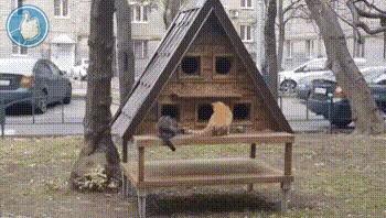 Кошкин дом Кот, Домашние животные, Дом, Милота, Гифка
