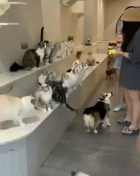 Куда без очереди? Кот, Котомафия, Собака, Животные, Кормление, Еда, Девушки, Гифка