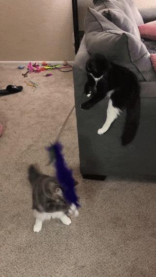 -Бро, давай поиграем!