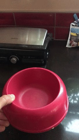 Стоит только поставить миску на стол...