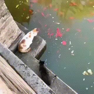 Здесь я рыбачу! Брысь!