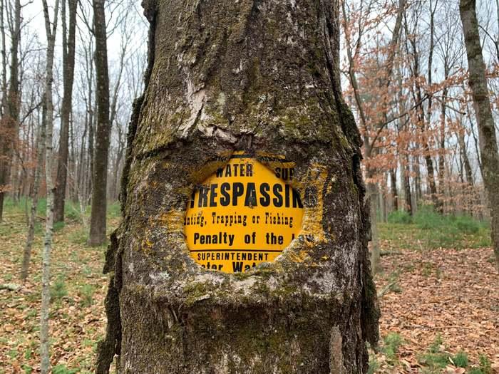 Дерево обросло вокруг знака, впитав в себя его краски