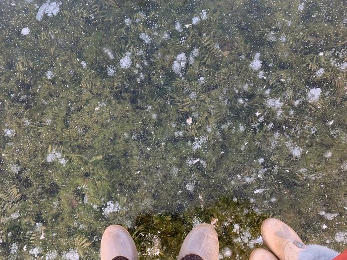 Ледяной гербарий Мороз, Лед, Воздух, Фотография, Красота, Картинки, Длиннопост