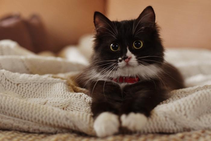 Мушка и 33 несчастья Кот, Котомафия, Милота, Фотография, Длиннопост, Домашние животные