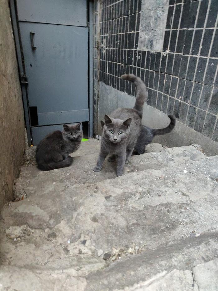 Котята ищут дом. Одесса Бездомные животные, Котята, Без рейтинга, Одесса, Длиннопост, Кот, В добрые руки