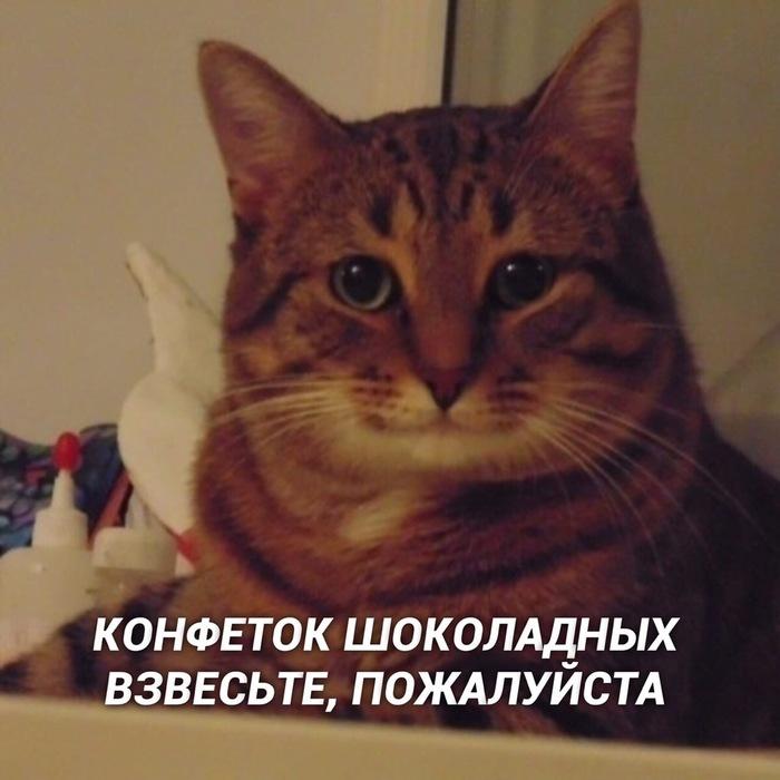 И так всегда Кот, Котомафия, Милота, Длиннопост