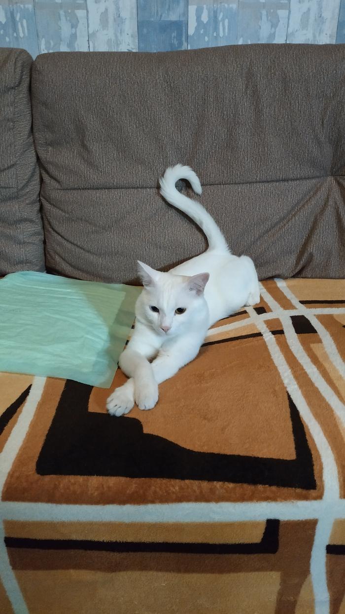 Коту нужен новый дом Без рейтинга, Кот, В добрые руки, Иркутск ищу дом, Длиннопост