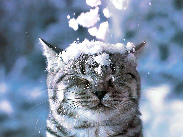 Зимние котики Кот, Зима, Красота, Снег, Фотография, Подборка
