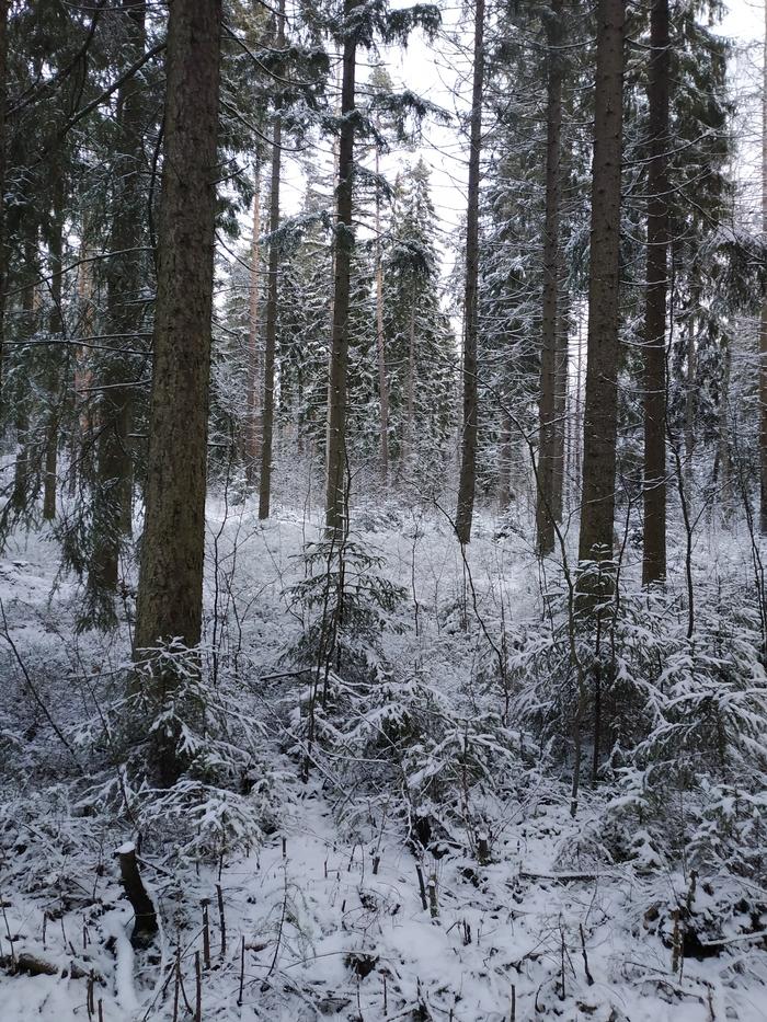 Как отдохнуть в Финляндии за день Финляндия, Лес, Зима, Длиннопост