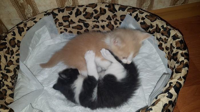 Наши подобранцы) Кот, Подобрали, Котята, Было-Стало, Милота, Длиннопост