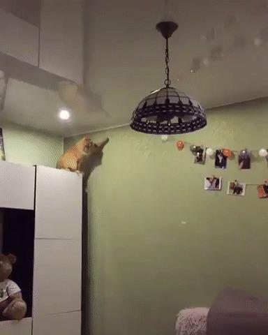Рубрика типичный кот