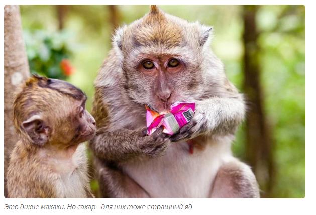 Ваша доброта убивает животных История, Рассказ, Животные, Посетители, Московский зоопарк, Яндекс Дзен, Длиннопост
