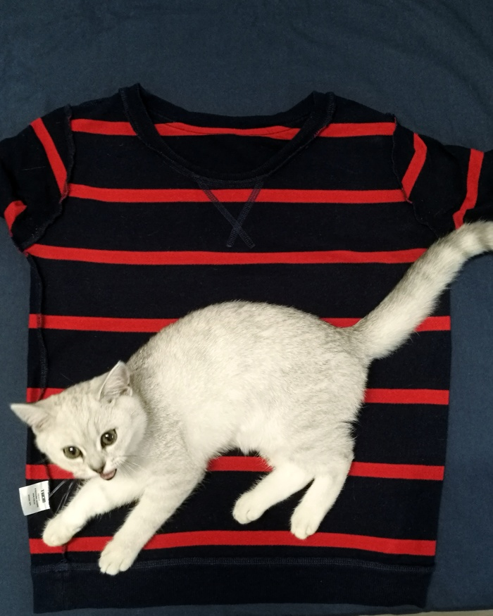 Бюджетная одежда Puma