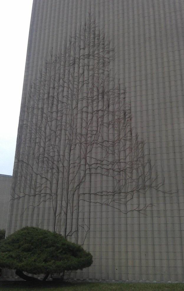 Плющ, который разросся на стене здания в форме дерева