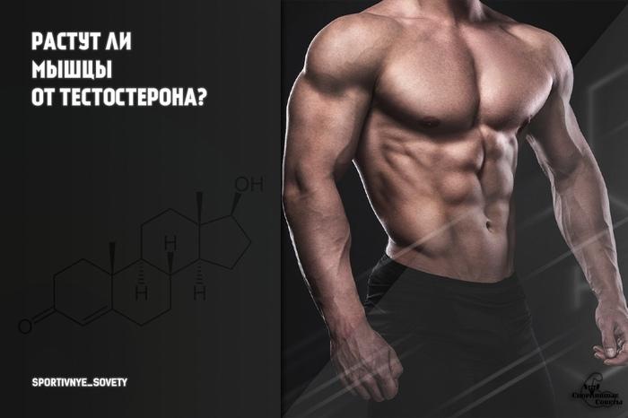 Как увеличить гормон тестостерон в домашних условиях