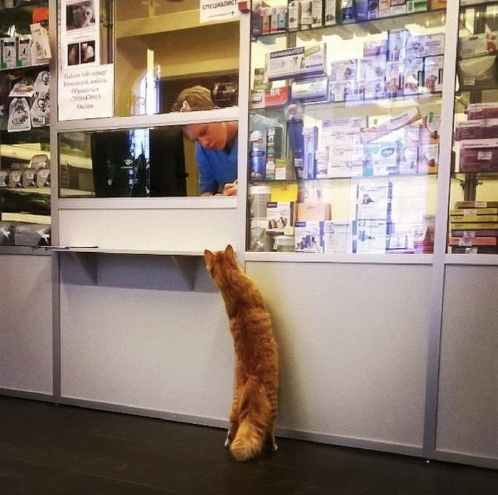 А на валерьянку котам скидки есть?
