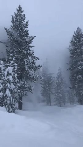 Ветер в заснеженном лесу