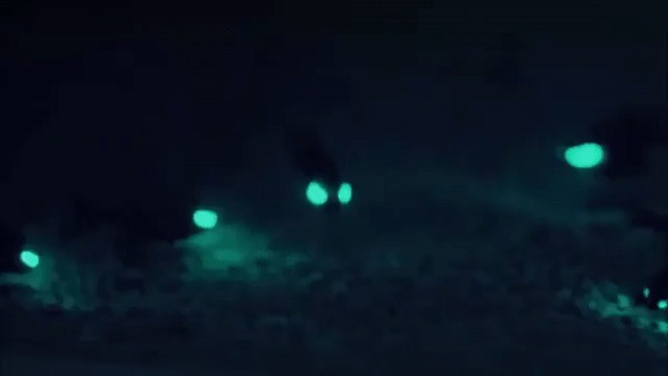 Фонареглазовые рыбы