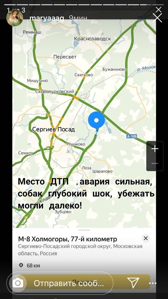Срочно!!! Москва, МО. Собаки сбежали при ДТП!!! Пропала собака, ДТП, Сергиев Посад, Московская область, Москва, Длиннопост, Без рейтинга