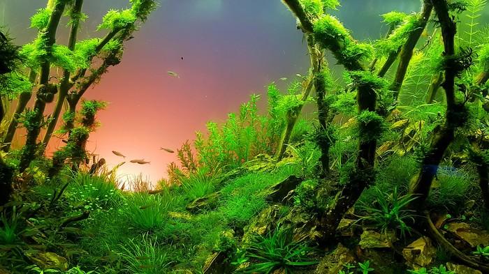 Водный мир. Создание природного аквариума 500 литров