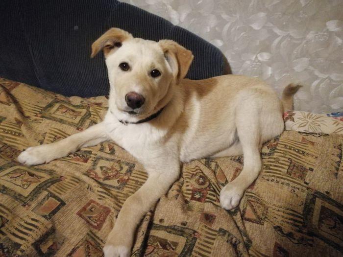 Ищем дом щенку Сахалин Найдена собака, Собака, В добрые руки, Сахалин, Южно-Сахалинск, Без рейтинга