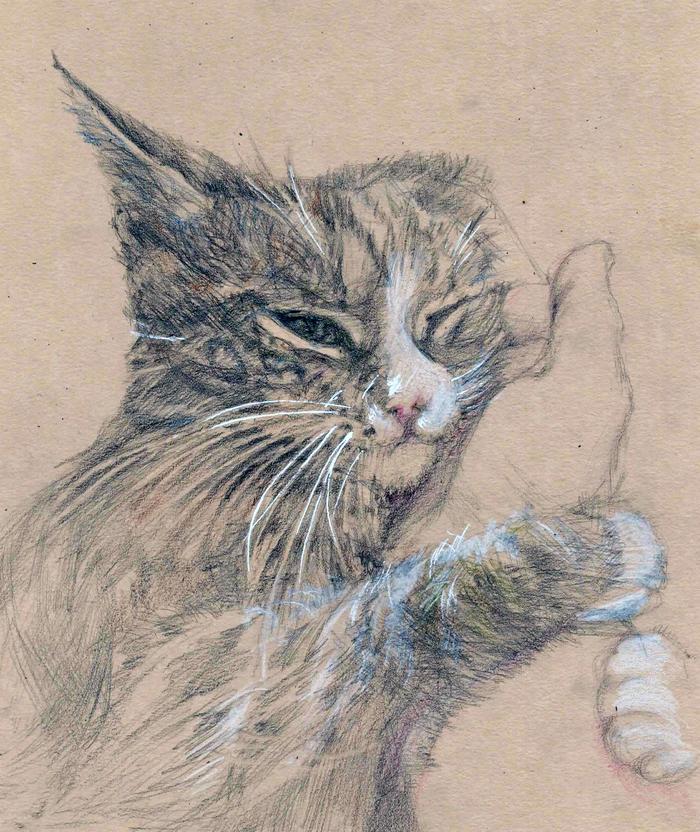 Кот, карандашный набросок