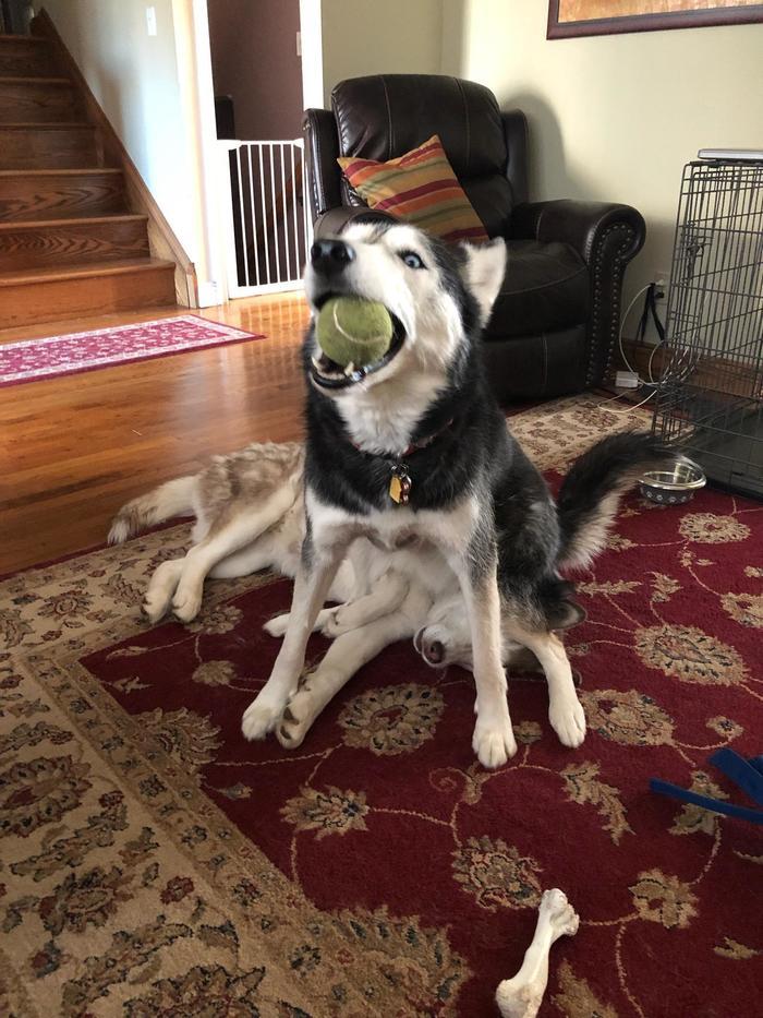 Мало того, что слямзил мячик у сестры, так еще и на голову ей сел