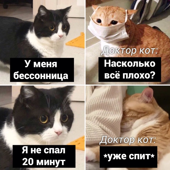 Кошачья клиника