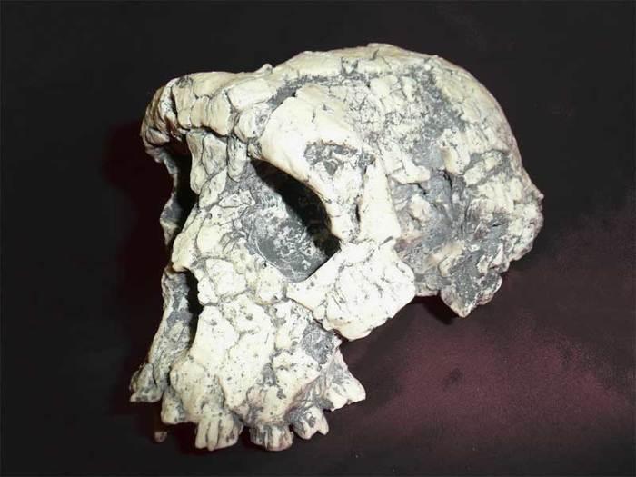 Эволюция человека и человеческих мозгов