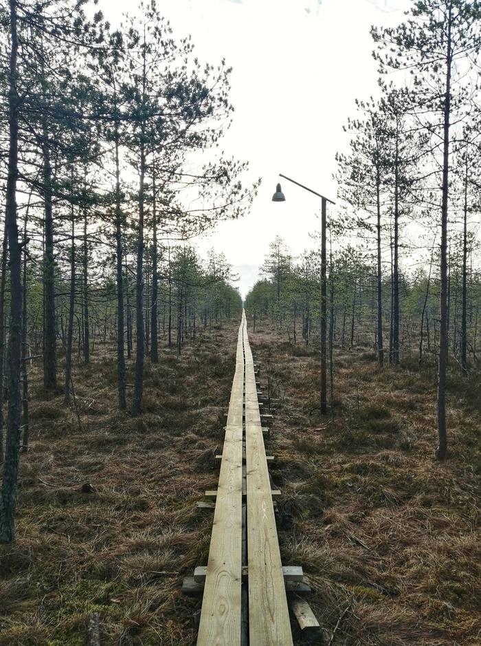 Прогулка по болоту Ламмин-Суо, Ленобласть