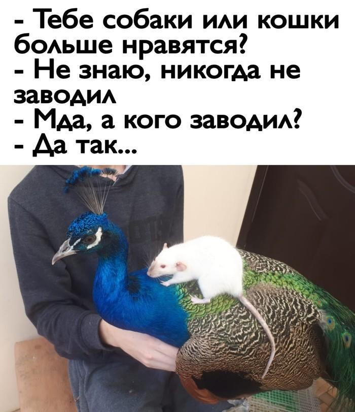 Главное ведь за ушком почесать)