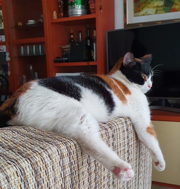 Соблазнительница на подлокотнике дивана