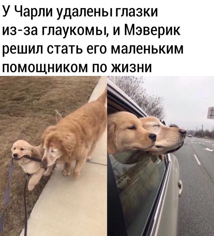 Когда поведение животных в пример человеку