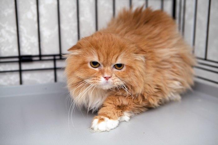 Как подобрать quotключикquot к сердцу самого замкнутого котика? Расскажем на примере интервью с хозяйкой Персика