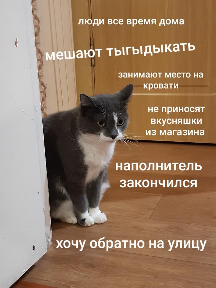 Кошачьи будни