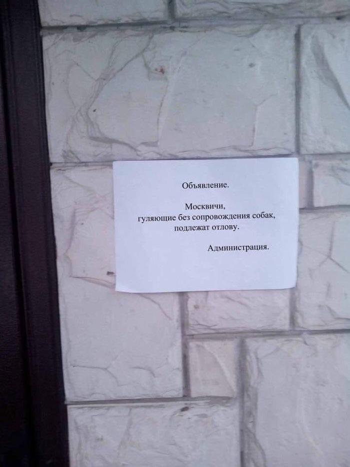https://cs9.pikabu.ru/post_img/2020/04/04/6/1585991454194797974.jpg
