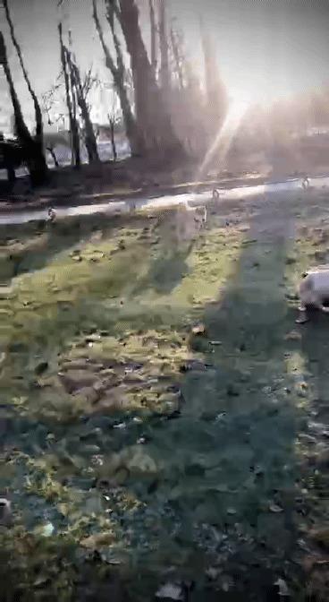 Укрощение японца Кот, Собака, Животные, Это фиаско братан!, Гифка, Длиннопост